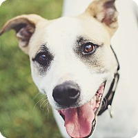 Adopt A Pet :: Bernie $0 Adoption Fee! - New Richmond,, WI