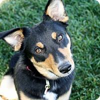 Adopt A Pet :: Tabatha - 30 lbs! - Yorba Linda, CA