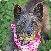Adopt A Pet :: Blackbean - Kingwood, TX
