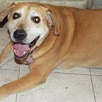 Adopt A Pet :: Light - San Antonio, TX