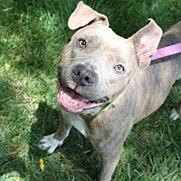 Adopt A Pet :: Bella - Durham, NC