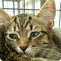 Adopt A Pet :: Scotty - Sarasota, FL
