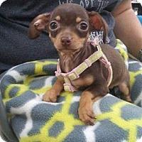 Adopt A Pet :: Violet - Joshua, TX