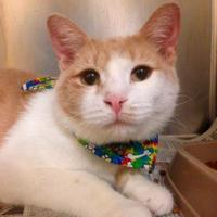 Adopt A Pet :: Tom Hanks - Richmond, VA