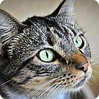 Adopt A Pet :: Clary - Jackson, MS