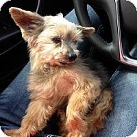 Adopt A Pet :: Buddy - Greendale, WI