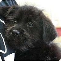 Adopt A Pet :: Gus Gus - Arlington, TX