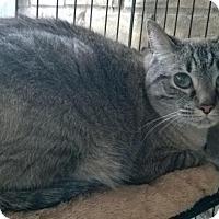 Adopt A Pet :: Samson - The Colony, TX