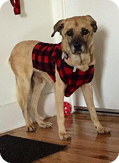 Shepherd (Unknown Type) Mix Dog for adoption in Santa Barbara, California - Eugene