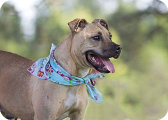 Terrier (Unknown Type, Medium) Mix Dog for adoption in Flint, Michigan - Jewel - Adopted
