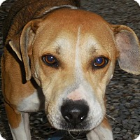 Adopt A Pet :: Ms Marley - Salem, WV