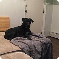 Adopt A Pet :: Rio - Blue Bell, PA