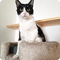 Adopt A Pet :: Selena - Los Angeles, CA