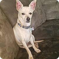 Adopt A Pet :: Davey - Lodi, CA