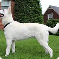Adopt A Pet :: Shilo-PA - Hooksett, NH