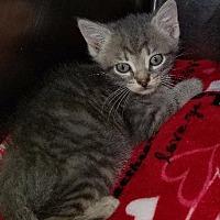 Adopt A Pet :: Schmidt - Port Clinton, OH