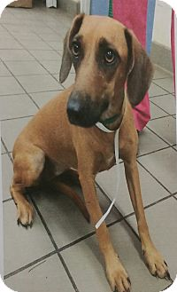 Terrier (Unknown Type, Medium) Mix Dog for adoption in Chippewa Falls, Wisconsin - Zelda