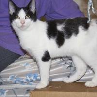 Adopt A Pet :: Salt & Pepper - Ellicott City, MD