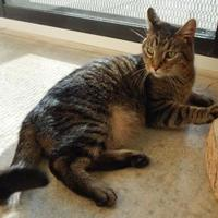 Adopt A Pet :: Willy - Monroe, WI