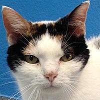 Adopt A Pet :: Cindy - Orlando, FL