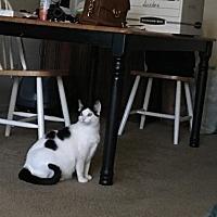 Adopt A Pet :: Dinah - Vacaville, CA