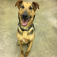 Adopt A Pet :: Memphis - Lake Odessa, MI