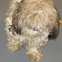 Adopt A Pet :: 17-09-2923 - Dallas, GA
