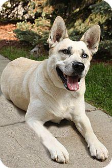 Husky Mix Dog for adoption in Rochester Hills, Michigan - Sammie
