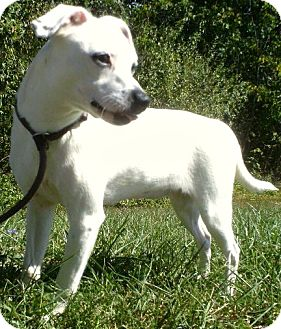 Jack Russell Terrier/Pug Mix Dog for adoption in Staunton, Virginia - Lolly