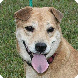 Shar Pei Mix Dog for adoption in McCormick, South Carolina - Cher
