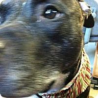 Adopt A Pet :: Princess (aka Pitty) - Wappingers Falls, NY