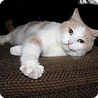Adopt A Pet :: Pumpkin - Nolensville, TN