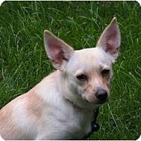 Adopt A Pet :: Chica - Rigaud, QC