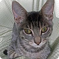Adopt A Pet :: Ralph - Modesto, CA