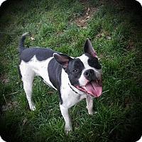 Adopt A Pet :: August - Cypress, CA