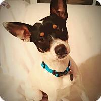 Adopt A Pet :: Nugget - Homewood, AL