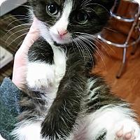 Adopt A Pet :: Drax - Fairborn, OH