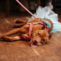 Adopt A Pet :: Kally - Crown Point, IN