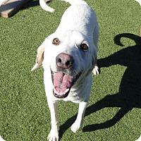 Adopt A Pet :: Basil - Yorktown, VA