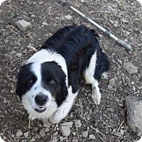 Adopt A Pet :: Rebel - Hazard, KY