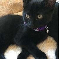 Adopt A Pet :: Emerald - Toms River, NJ