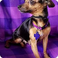 Adopt A Pet :: Roxy - San Antonio, TX