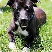 Adopt A Pet :: Oliver - Appleton, WI