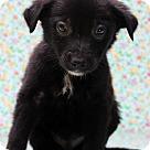 Adopt A Pet :: Ryan