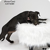 Adopt A Pet :: Lucy  (Foster Care) - Baton Rouge, LA