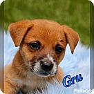 Adopt A Pet :: Gru