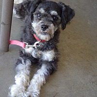 Adopt A Pet :: Adeline - Quail Valley, CA