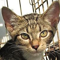 Adopt A Pet :: Benji - Germantown, MD