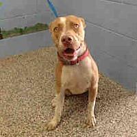 Adopt A Pet :: URGENT ON 8/24  San Bernardino - San Bernardino, CA