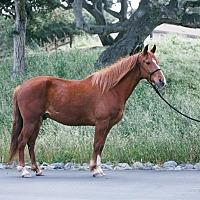 Adopt A Pet :: Diego - Monterey, CA